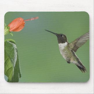 Ruby-throated Hummingbird Archilochus Mousepad