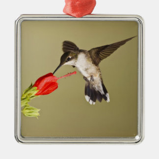 Ruby-throated Hummingbird Archilochus Silver-Colored Square Decoration