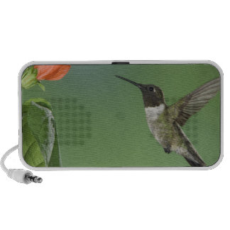 Ruby-throated Hummingbird, Archilochus Travelling Speaker