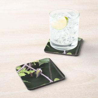 Ruby-throated Hummingbird Drink Coasters