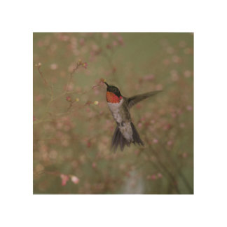 Ruby Throated Hummingbird drinking from flower Wood Prints