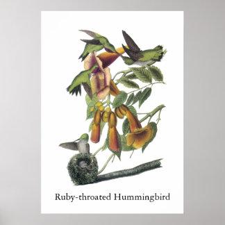 Ruby-throated Hummingbird John Audubon Posters