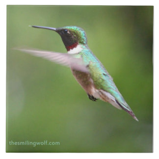 Ruby-Throated Hummingbird Large Square Tile