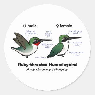 Ruby-throated Hummingbird Statistics Classic Round Sticker