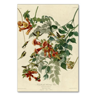 Ruby-throated Hummingbird Table Cards