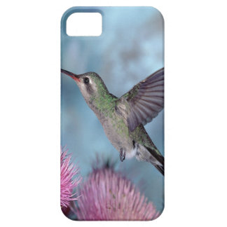 Rubythroat Hummingbird iPhone 5 Cover