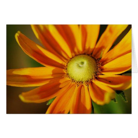 Rudbeckia Bloom Greeting Card
