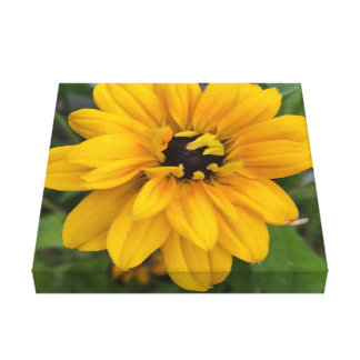 Rudbeckia Flower Canvas Print