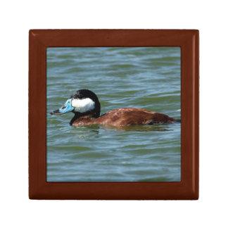 Ruddy Duck Keepsake Box