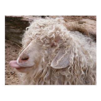 Rude Old Goat Postcard