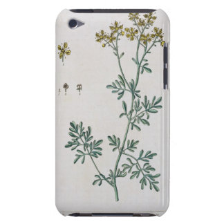 Rue, plate 7 from 'A Curious Herbal', published 17 iPod Touch Cover