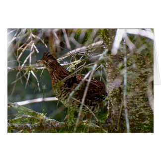 Ruffed Grouse 02 Note Card