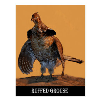 Ruffed Grouse (Pennsylvania) Postcard