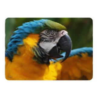 Ruffled Blue and Gold Macaw 13 Cm X 18 Cm Invitation Card