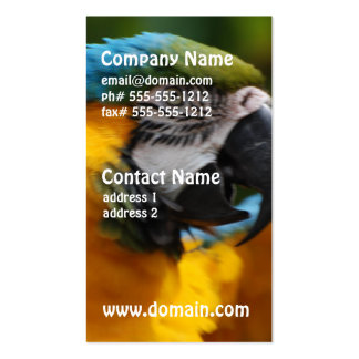 Ruffled Blue and Gold Macaw Pack Of Standard Business Cards