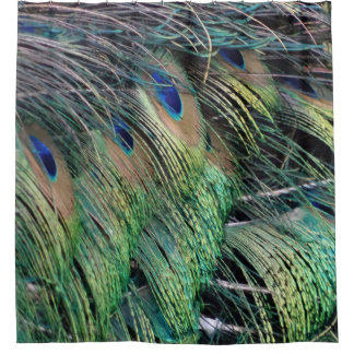 Ruffled Peacock Feathers With New Growth Shower Curtain
