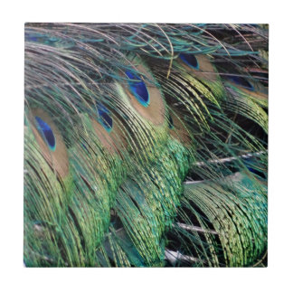 Ruffled Peacock Feathers With New Growth Tile
