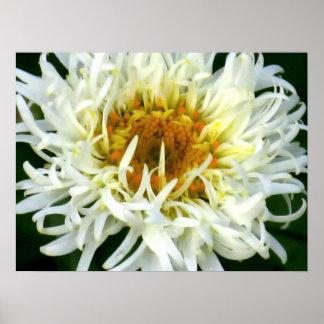 Ruffled Shasta Daisy Print