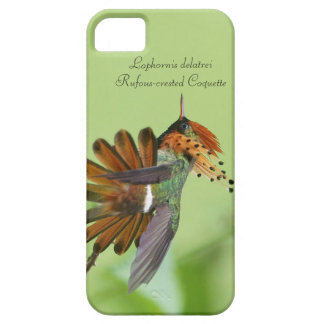 Rufous-crested Coquette iPhone 5 Case