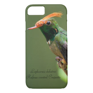 Rufous-crested Coquette iPhone 7 Case