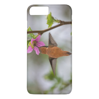 Rufous hummingbird at wild rose iPhone 7 plus case