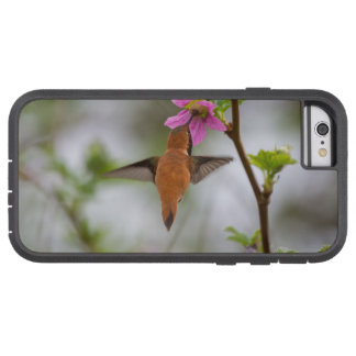 Rufous hummingbird at wild rose tough xtreme iPhone 6 case