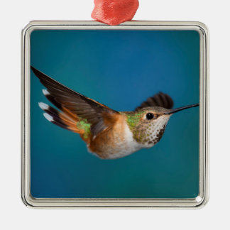 Rufous Hummingbird Christmas Ornament