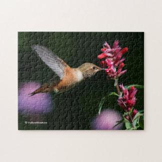 Rufous Hummingbird Feeding on the Anise Hyssop Puzzle