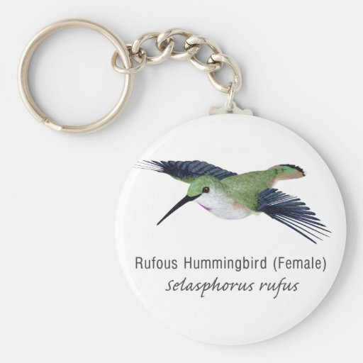 Rufous Hummingbird female with Name Keychains