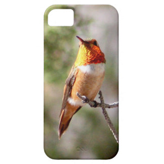Rufous Hummingbird iPhone 5 Cover