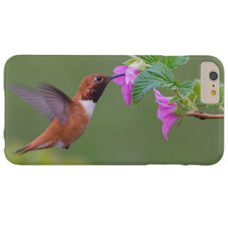 Rufous Hummingbird on Wild Rose Barely There iPhone 6 Plus Case