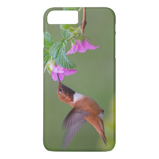 Rufous Hummingbird on Wild Rose iPhone 7 Plus Case