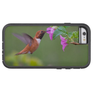 Rufous Hummingbird on Wild Rose Tough Xtreme iPhone 6 Case
