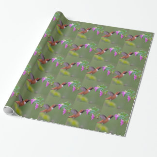 Rufous Hummingbird on Wild Rose Wrapping Paper