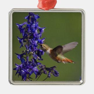 Rufous Hummingbird, Selasphorus rufus, female Christmas Ornament