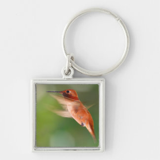 rufous hummingbird Silver-Colored square key ring