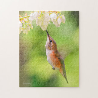 Rufous Hummingbird Sips Blueberry Blossom Nectar Jigsaw Puzzle