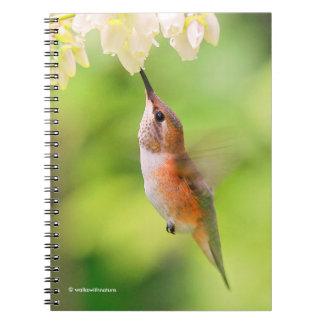 Rufous Hummingbird Sips Blueberry Blossom Nectar Notebook