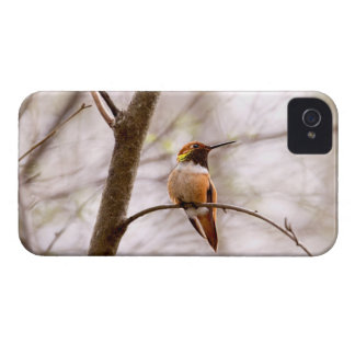 Rufous Hummingbird Sitting iPhone 4 Case-Mate Case