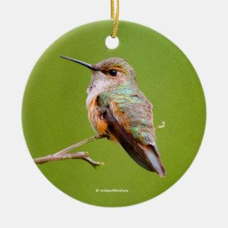 Rufous Hummingbird Sitting in the California Lilac Christmas Ornament