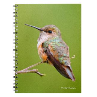 Rufous Hummingbird Sitting in the California Lilac Notebook