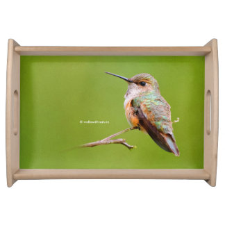 Rufous Hummingbird Sitting in the California Lilac Serving Tray