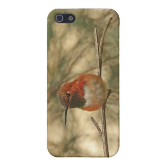 Rufous Hummingbird Sitting Case For iPhone 5