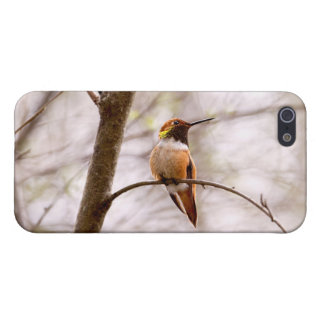 Rufous Hummingbird Sitting iPhone 5 Case