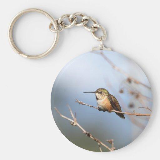 Rufous Hummingbird Sitting Key Chain