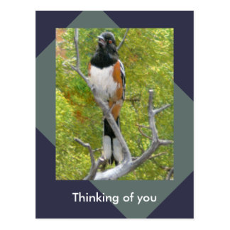 Rufous-Sided Towhee Nature Postcard