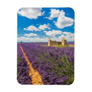 Ruin in Lavender Field, France Magnet