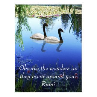 Rumi The wonders Postcard