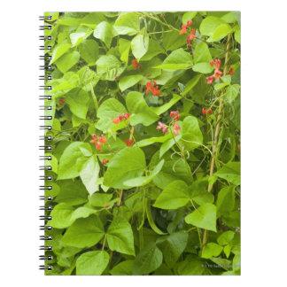 Runner beans in flower spiral notebooks