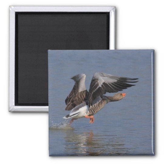Running Greylag Goose Square Magnet